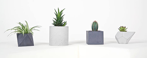 betonica